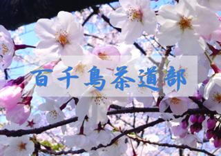 茶道部3月のコピー.jpg